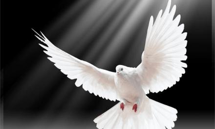Dünya Barış Günü Mesajı