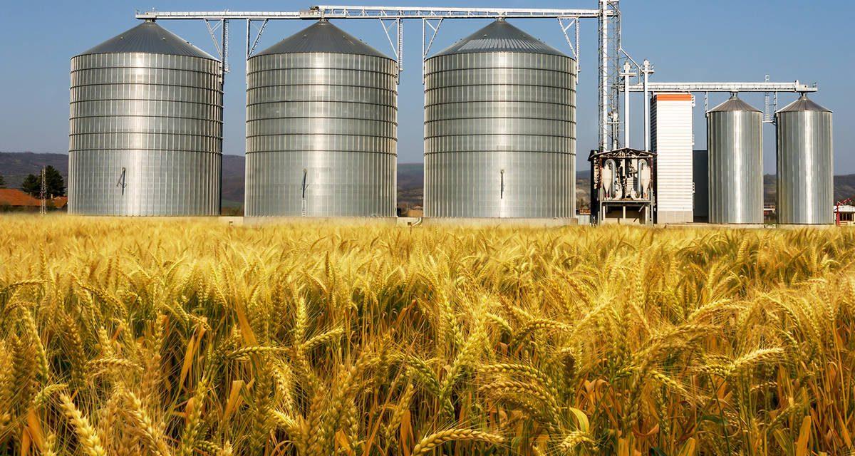 Umut Oran bu kez savaş ve afet buğday stokunu gündeme taşıdı